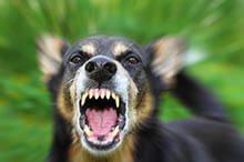 Dog Bite Help